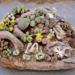 Živé kameny mnoha druhů
