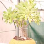 Pohádkové krajinky ze sukulentních rostlin 2013